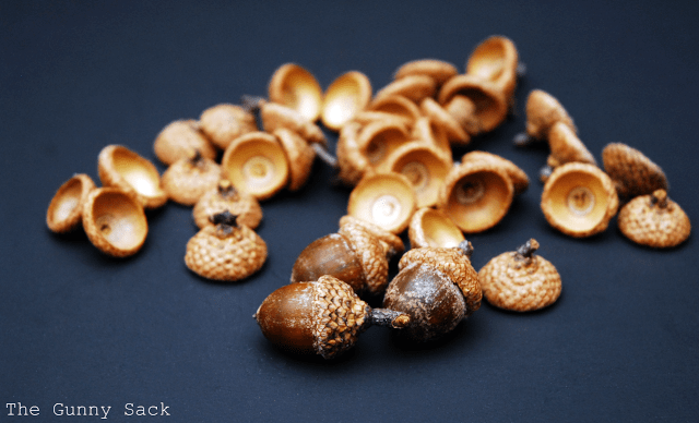 acorns and acorn caps