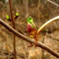 Spring {Break}