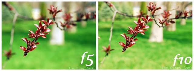 branch at f5 versus f10