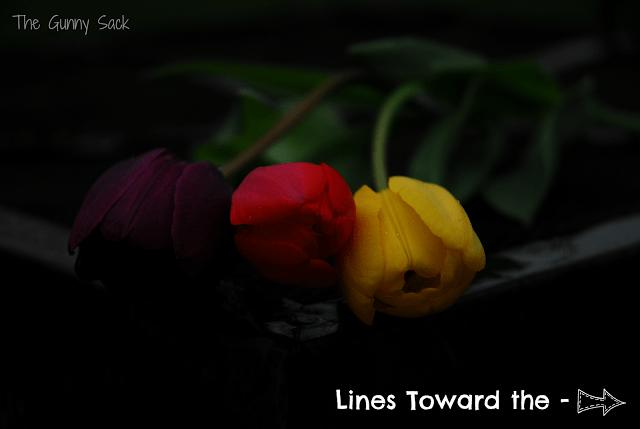darker tulips