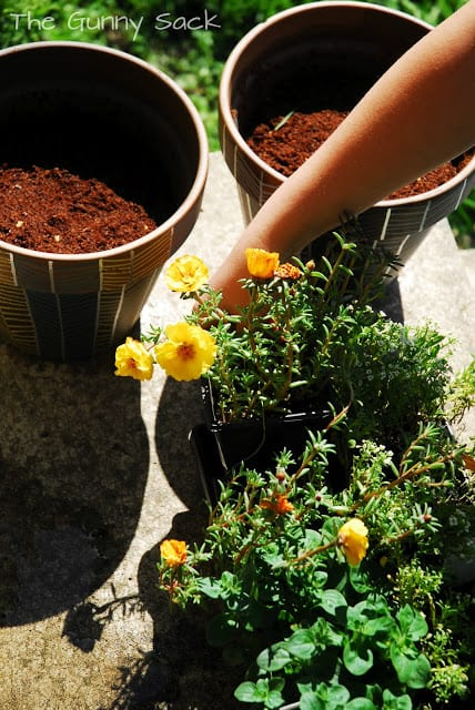 planting flowers in pots