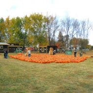 A Visit To The Apple Orchard