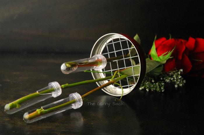 flower stems in water capsules
