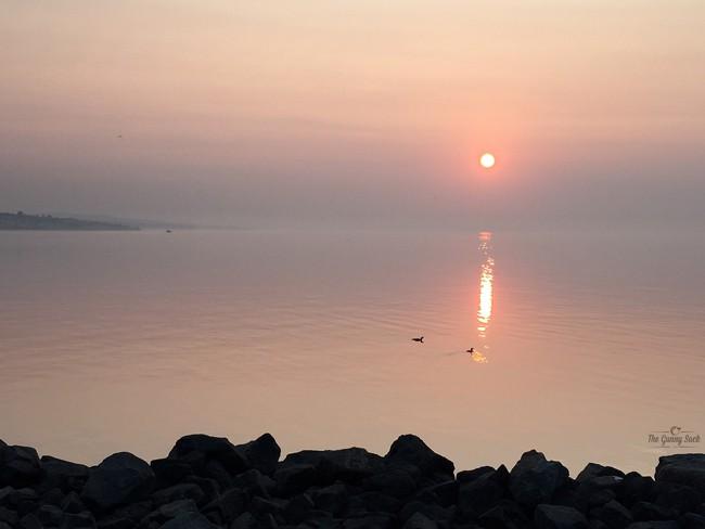 Loons On Lake Superior | thegunnysack.com