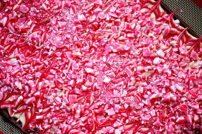 Peppermint Candy Cane Swirl Bark
