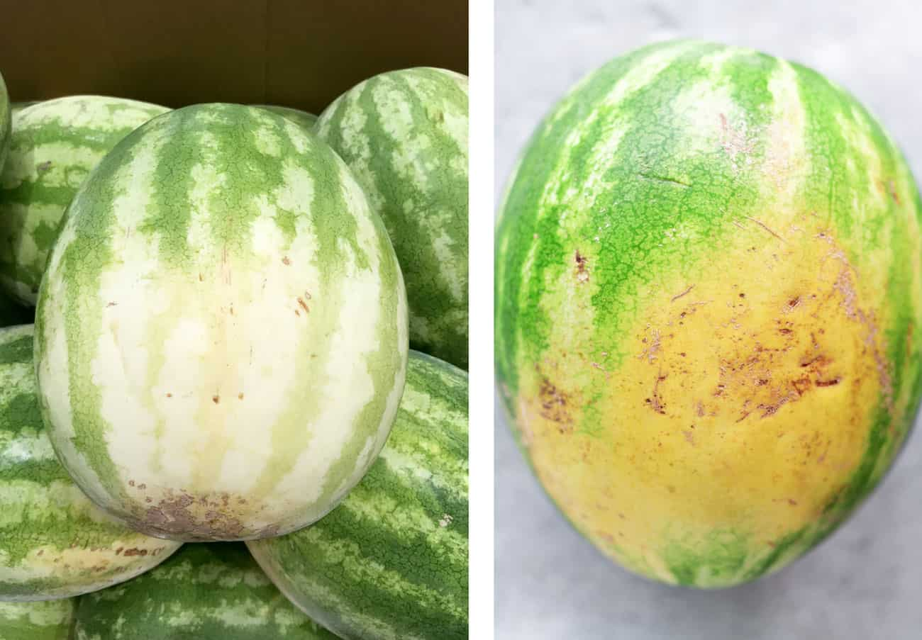 a watermelon with a white spot and another with a creamy yellow spot